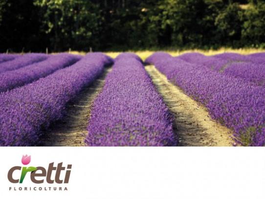 Logo-rebranding per Floricoltura Cretti