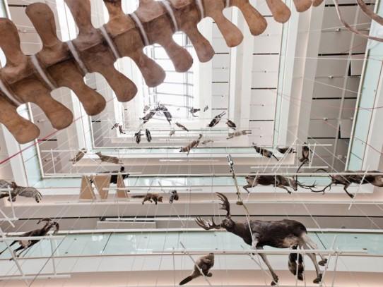 Il MUSE Museo delle Scienze di Trento